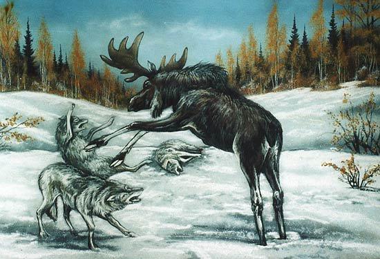 Картинка про лося и волка